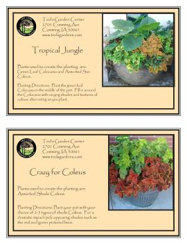 Container Garden Recipes Big Leaf Plants