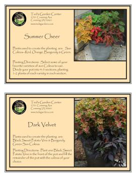 Leafy Plants For Container Garden Recipes