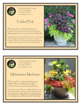 Bright Flowers For Container Garden Recipes Ted Lare