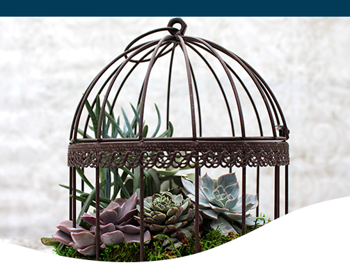 Succulent birdcage antique design decor home style living lifestyle creative diy project