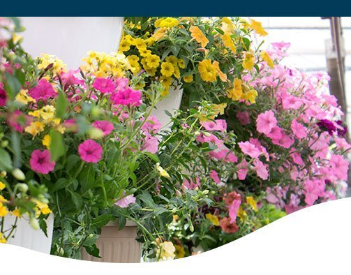 Ted Lare Top New Annuals for 2018