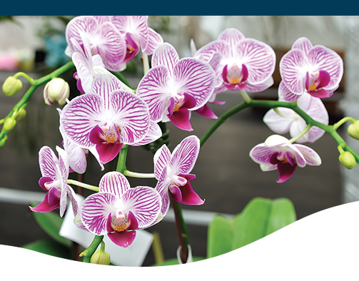 Orchids Care Reblooming Ted Lare Design Build