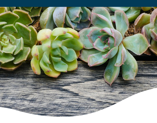 Succulent Crafts Wreath, driftwood, picture frames, troughs