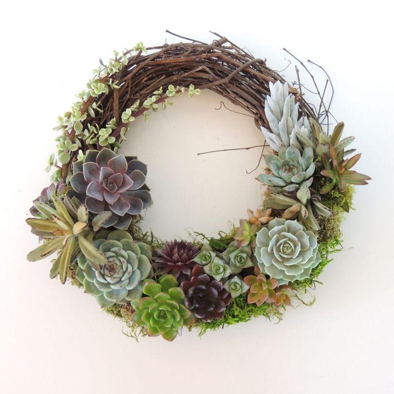 Grapevine Wreath Succulent Kit