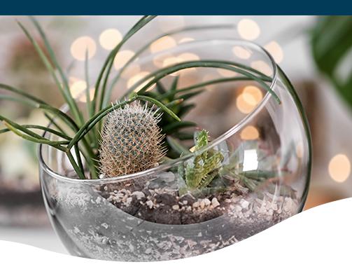 Low Light Closed Terrarium Plants Ted Lare Design Build
