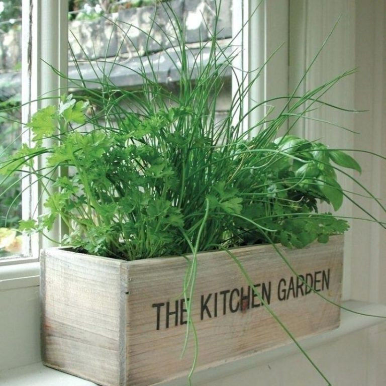 Fresh Herb Kitchen Planter