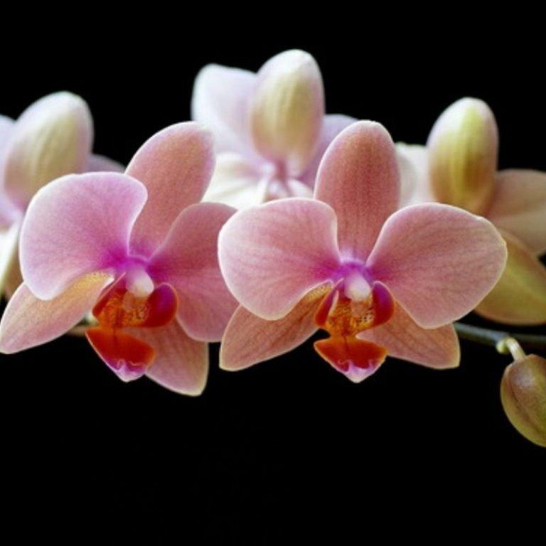 Orchids Workshop 3/27/21 1pm