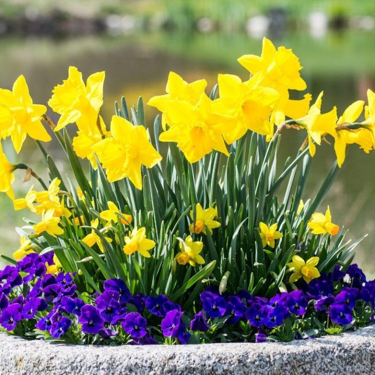Sweet Spring Planter