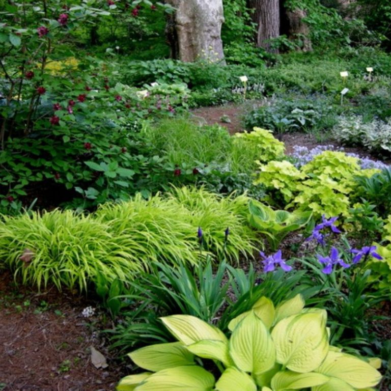 Successful Shade Gardening