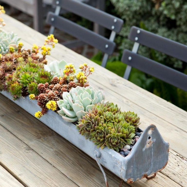 Succulent Trough Planter