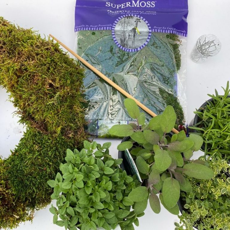 Living Wreath Kit- Herbs