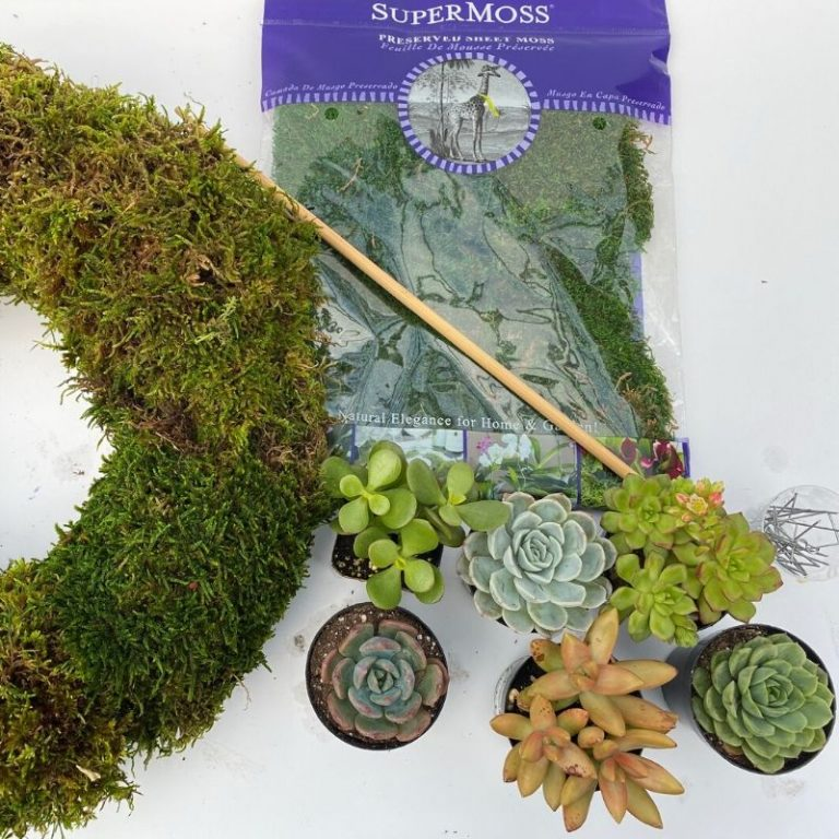 Living Wreath Kit- Succulents