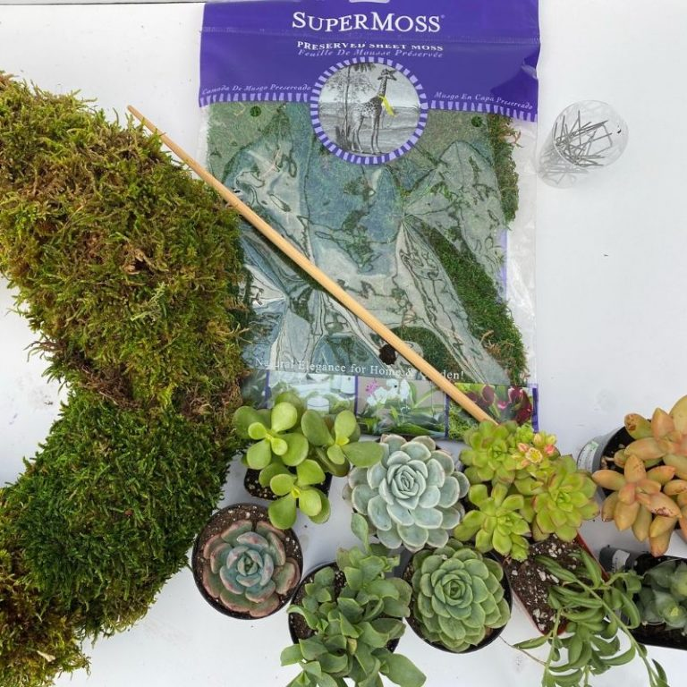Living Wreath Kit- Succulents Deluxe