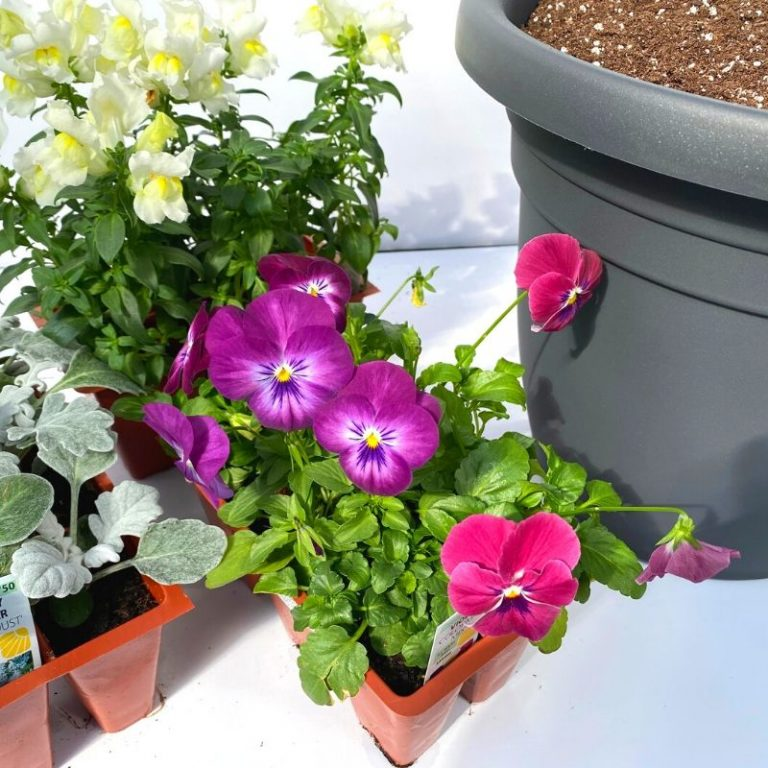 Sweet Spring Planter Kit