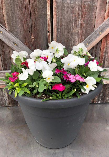 Spring Planter Pink & White