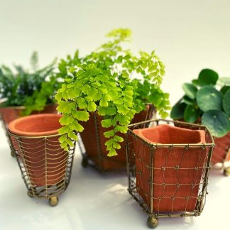 Terracotta Planter w/Wire