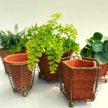 Terracotta Planter w/Wire