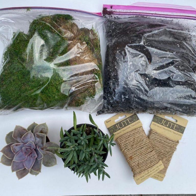 Succulent Kokedama Kit