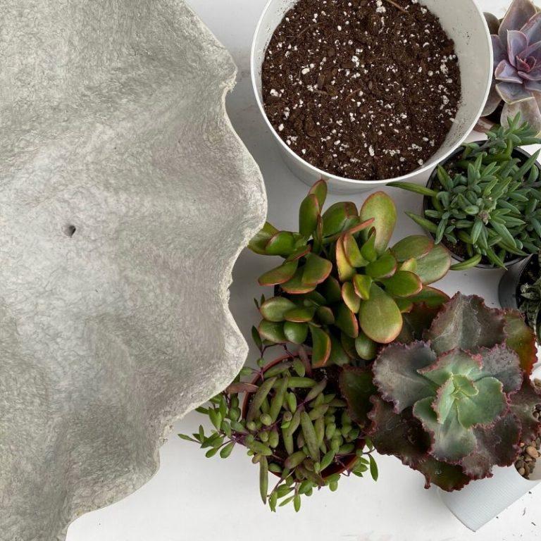 Seashell Planter Kit