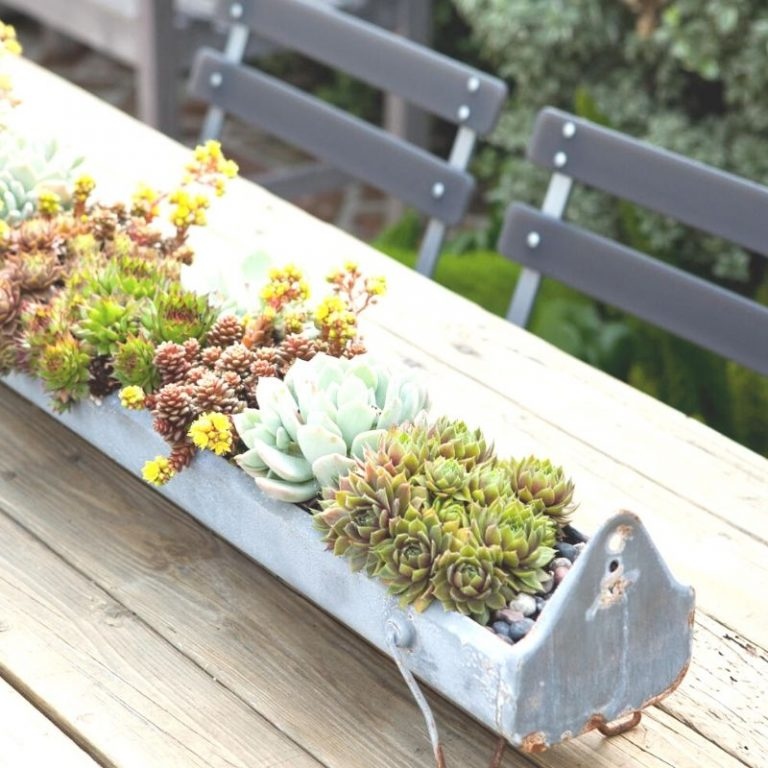 Succulent Trough Kit