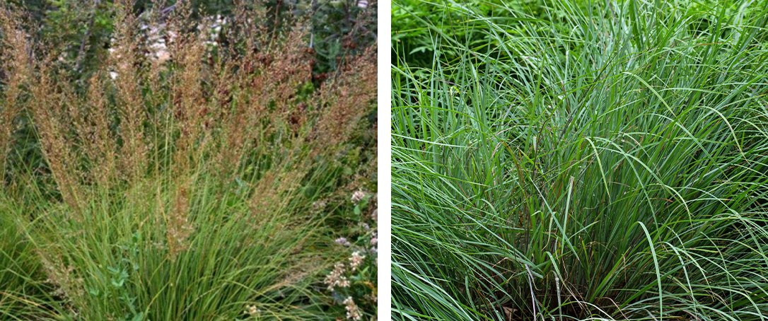 prairie dropseed and little bluestem ted lare