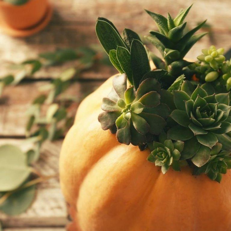 Succulent Pumpkins 9/26/20 12pm