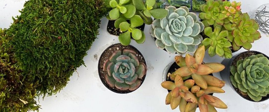 succulent living wreath kit fall class at Ted Lare
