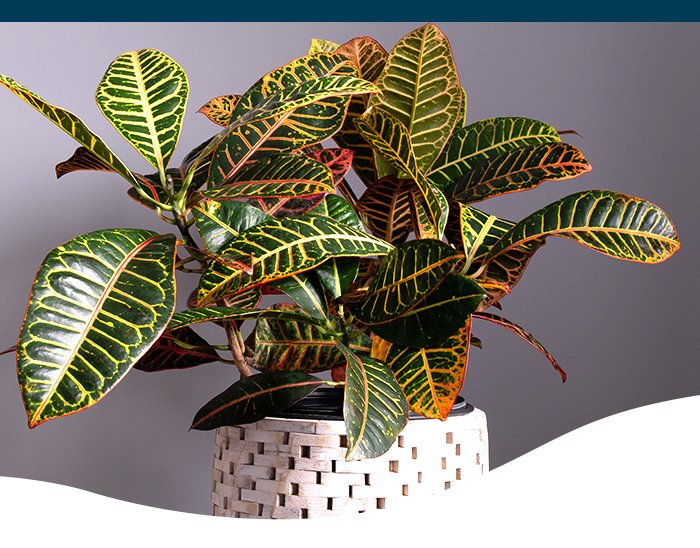 Fall foliage houseplants at Ted Lare
