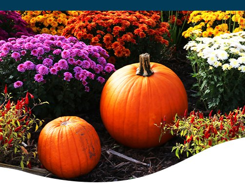 fall annual containers