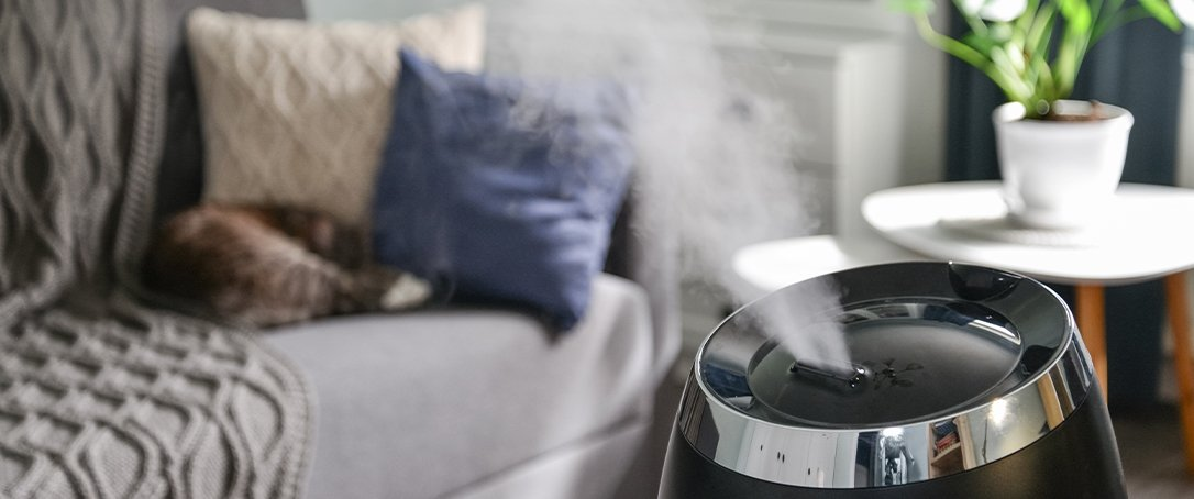 Ted Lare changing care houseplants humidifier