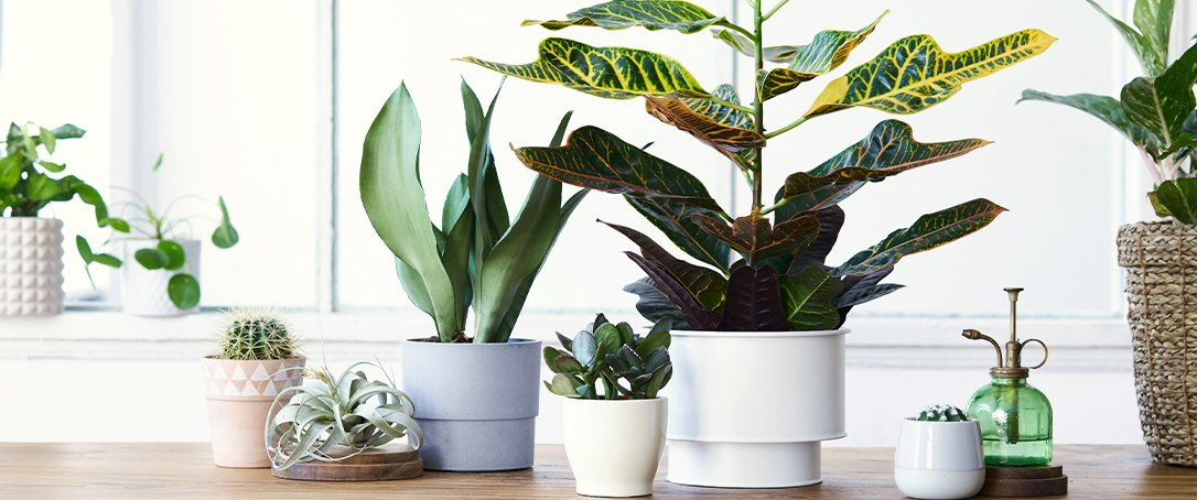 Ted Lare Iowa how to care for indoor plants
