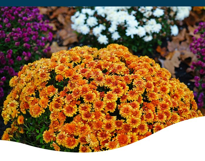 Ted Lare fall perennials color