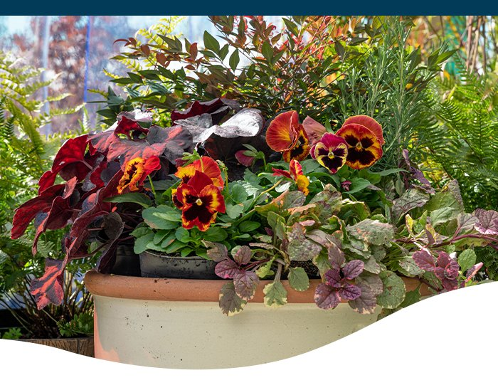 best plants fall containers Ted Lare
