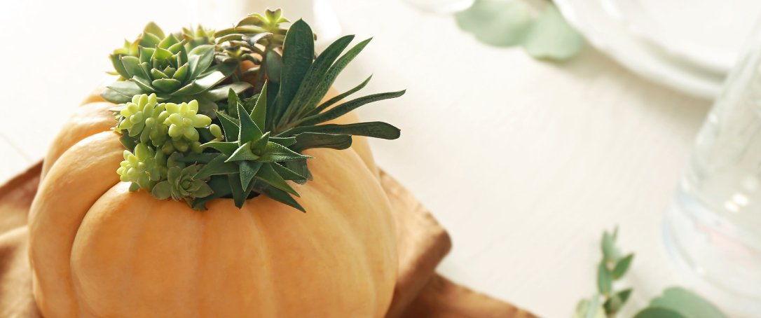 pumpkin succulent inspiration fall decor Ted Lare