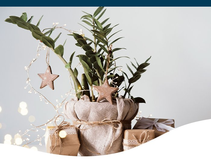 indoor holiday planters Ted Lare