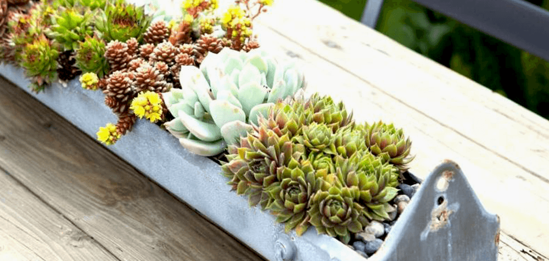 succulent trough workshop