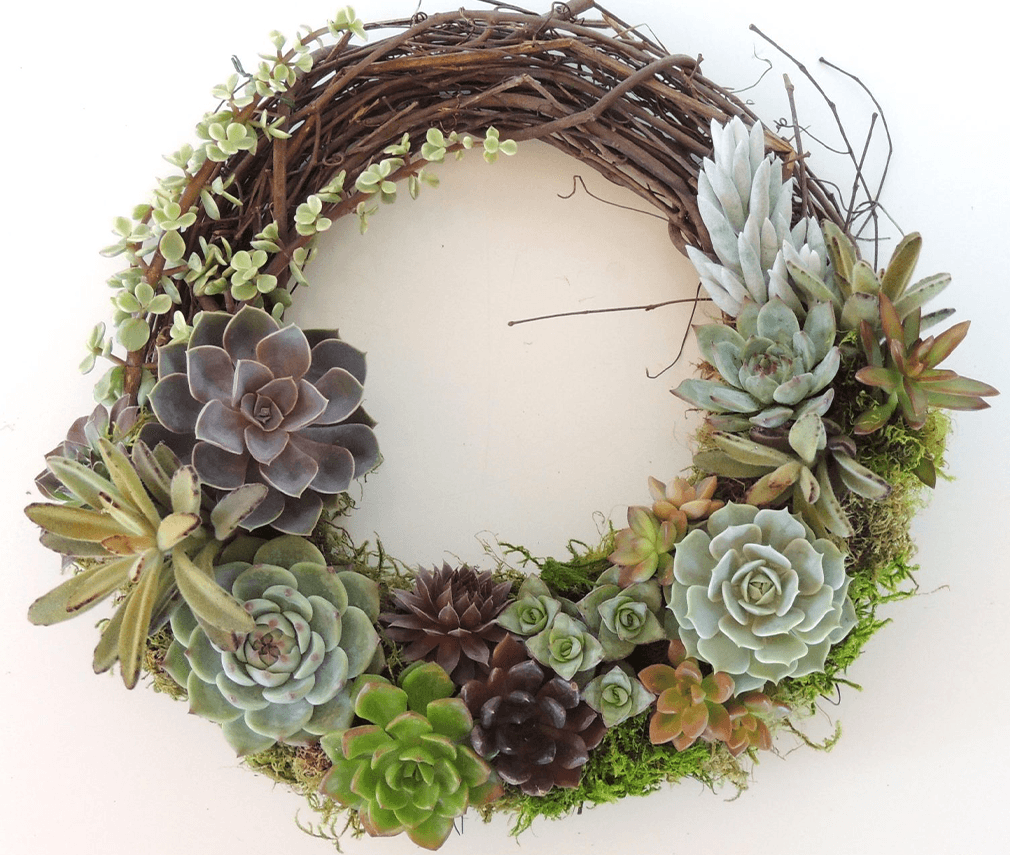 grapevine wreath with succulents