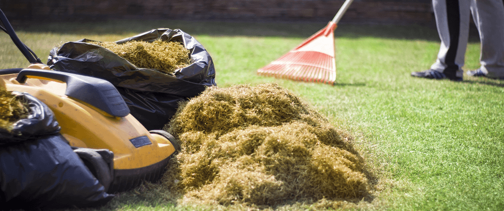 cleaning and raking lawn thatch