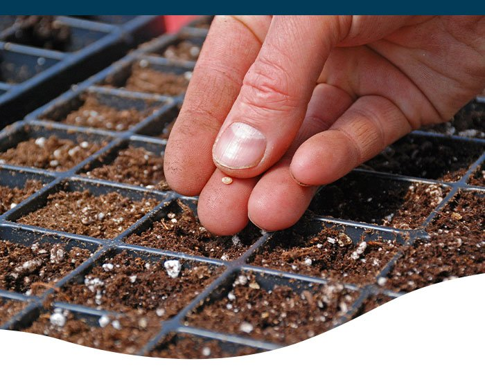 man planting seeds in cell tray
