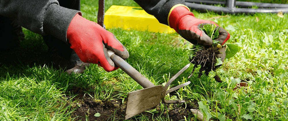 using tools to weed the lawn