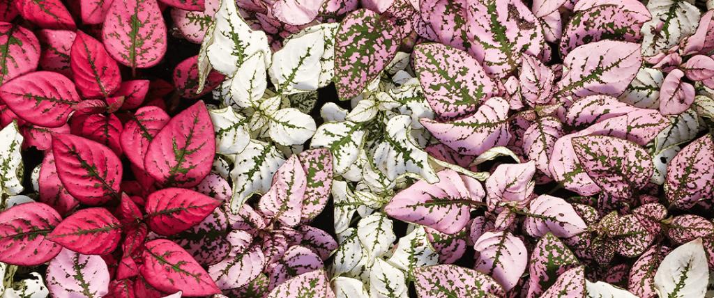 polka dot plants ted lare design & build