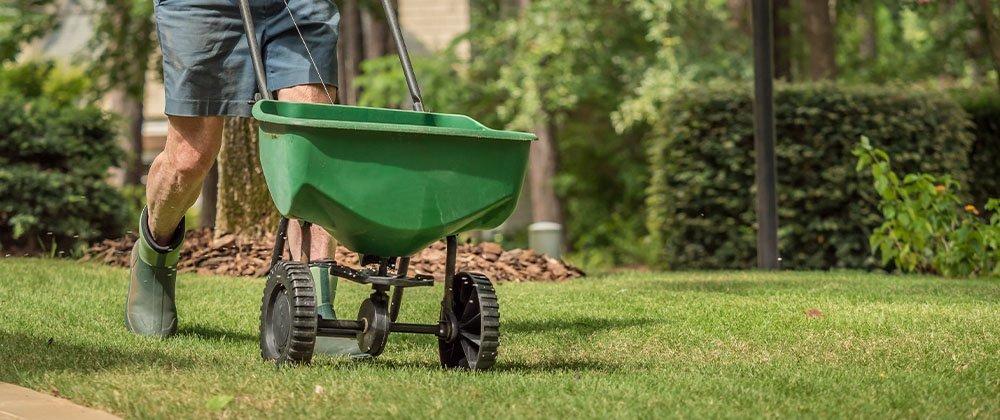 fertilizing lawn ted lare design & build