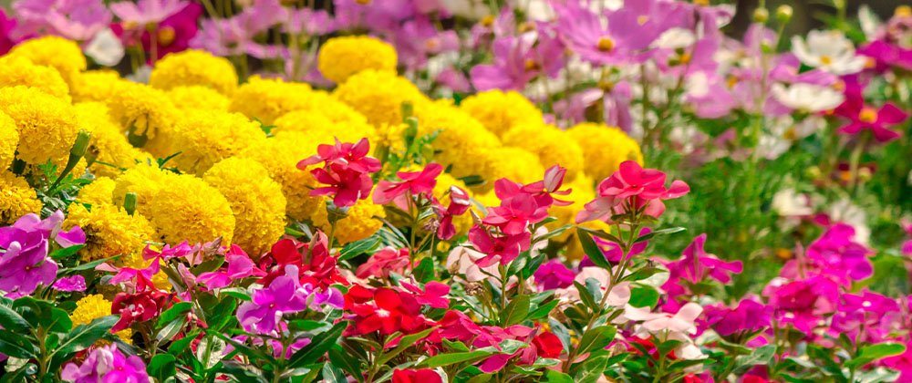 colorful flower blooms in garden