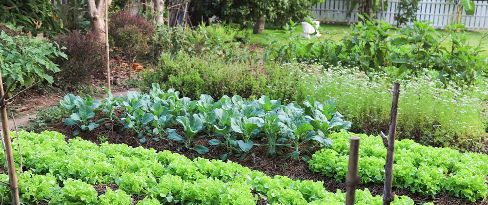 veggie garden ted lare design & build