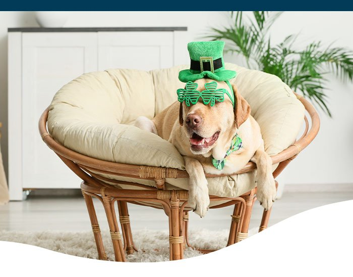 dog in St Paddy's Day outfit on chair