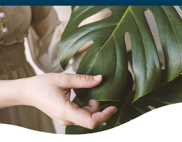 woman touching monstera plant leaf
