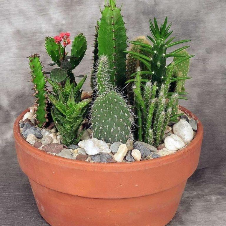 Cacti Planter Workshop 08/07/21 9am