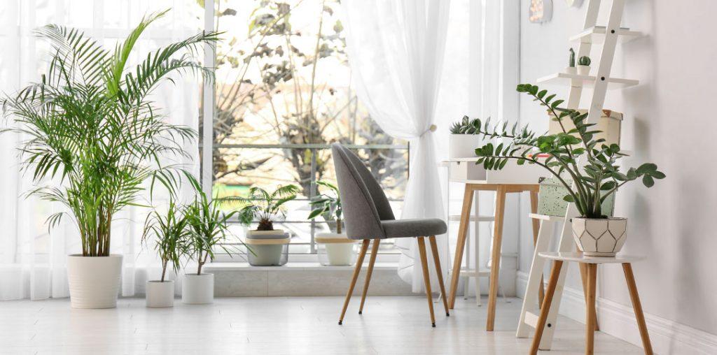 indoor houseplants ted lare design & build