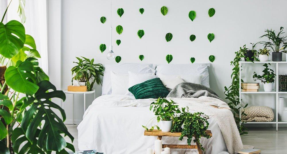 indoor houseplants room ted lare design & build