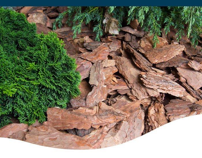 organic mulch in garden
